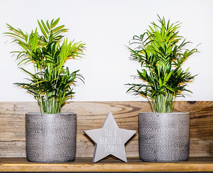 """two plant pots next to each other with a star that says """"tell a beautiful story"""""""